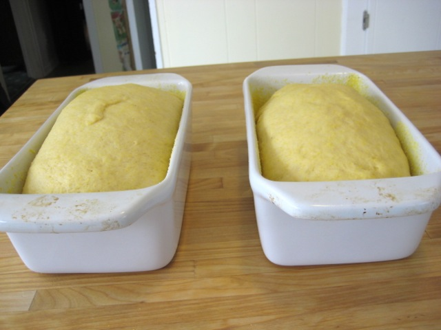 Loaves after rising